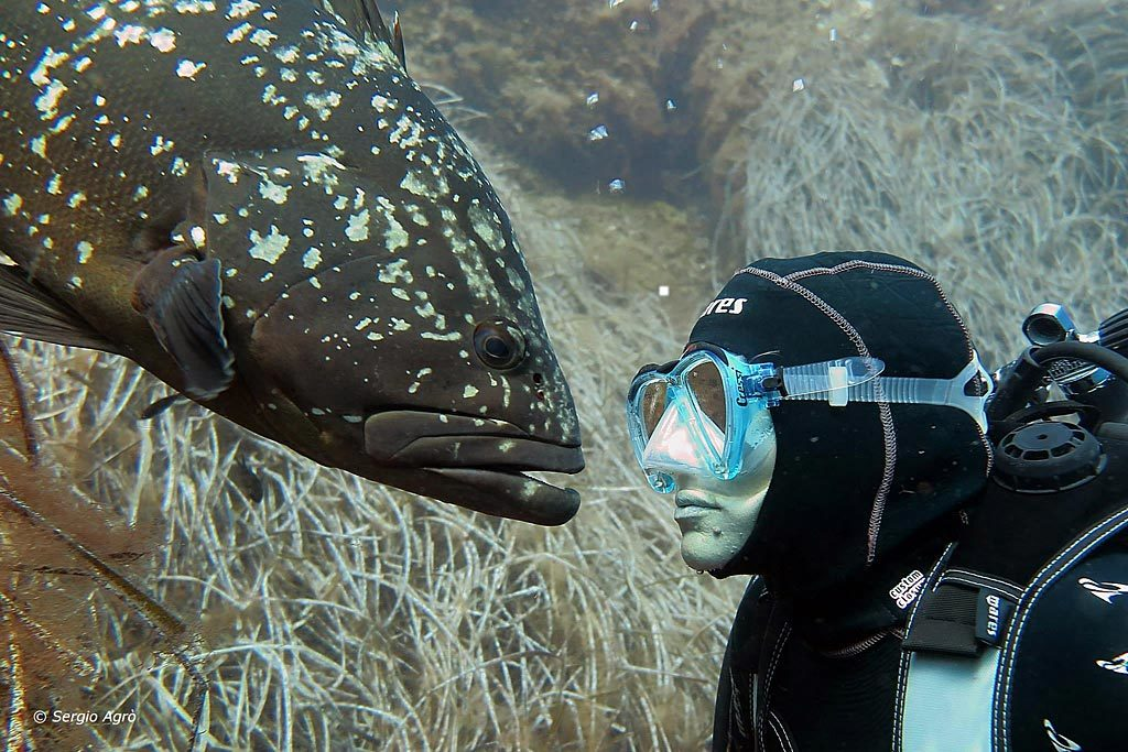 Diving all'Isola d'Elba